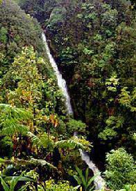 cascada en bosque