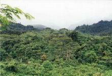 Bosque en la Amazonia