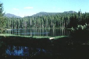 bosque boreal
