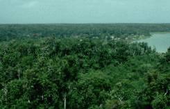 bosque tropical