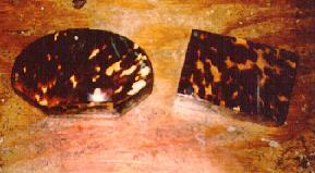 Aretes de concha de carey