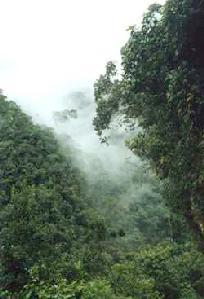 Bosque en Perú