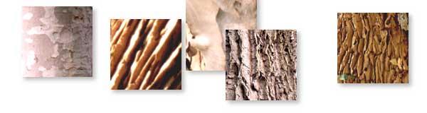 varios tipos de corteza