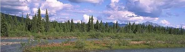 bosque boreal de Alaska