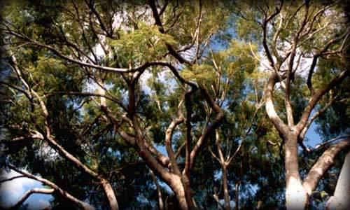 dosel en un bosque tropical