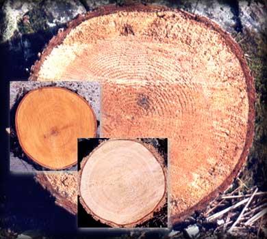 algunos cortes de troncos