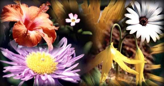 varios tipos de flores