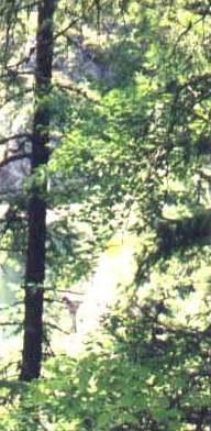 Árboles y arbustos en un bosque templado