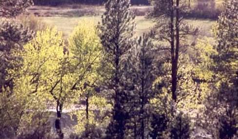 Bosque mixto de coníferas y hojas anchas