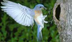 ave entrando a nido