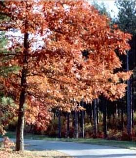 hojas con colores otoñales