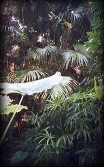 vegetación de sotobosque