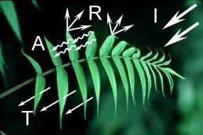 interaccion luz incidente con hojas