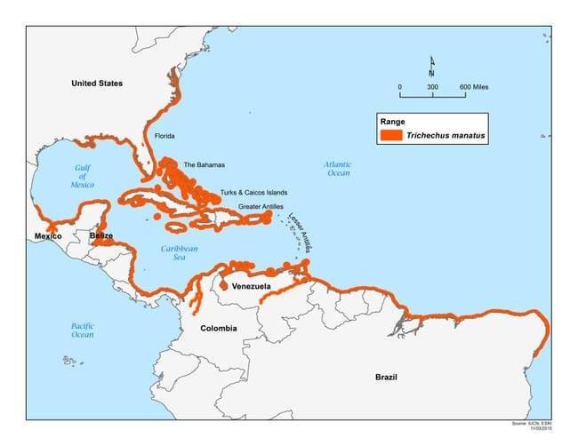 Rango del manatí del caribe